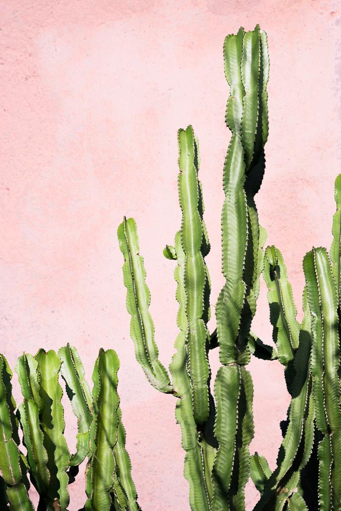 plants on pink cactus. Black Bedroom Furniture Sets. Home Design Ideas